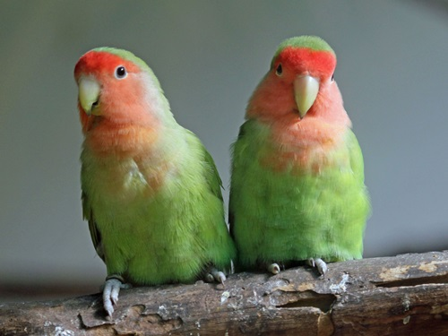 Photo of Top Ten Best Bird Pets To Own