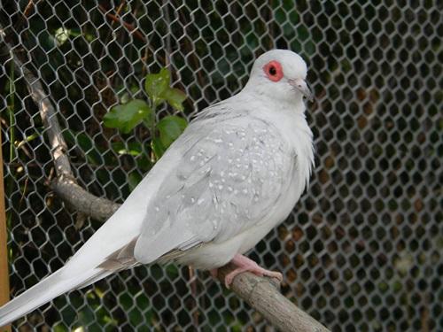 Top Ten Best Bird Pets To Own