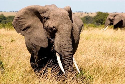 Top Ten Biggest Animals In The World