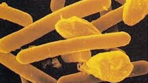 Top Ten Deadliest Poisons In The World