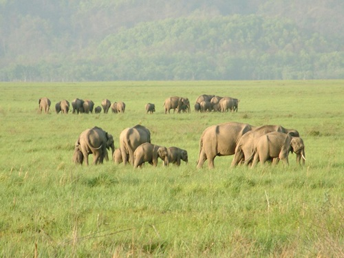 Top Five National Parks in India – Indian Wildlife