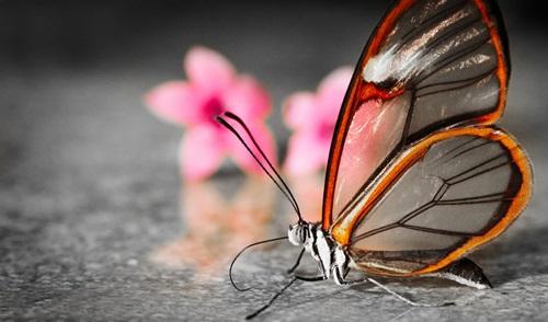 Ten Amazingly Beautiful Transparent Animals