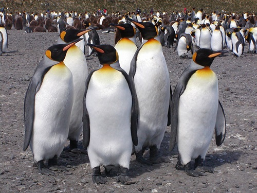 Top Ten Biggest Birds In The World