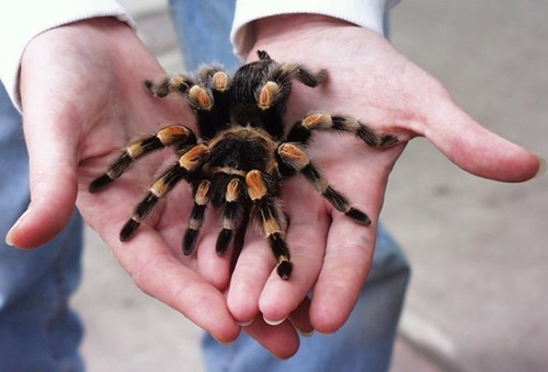 Top Ten Most Unusual Pets To Own