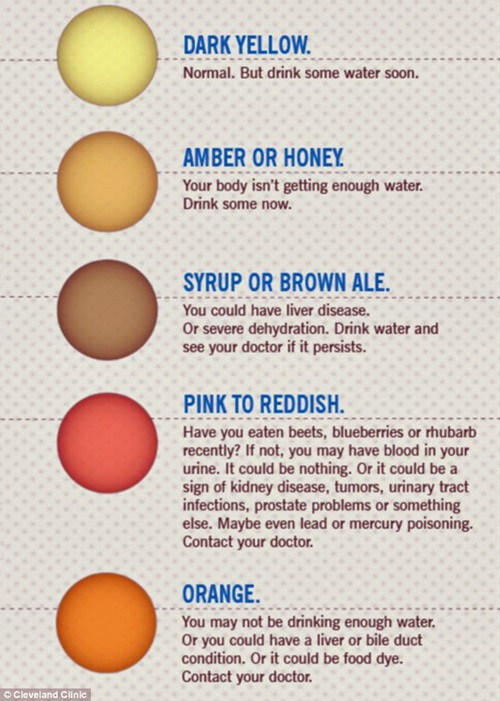 Know More about Your Health through Urine