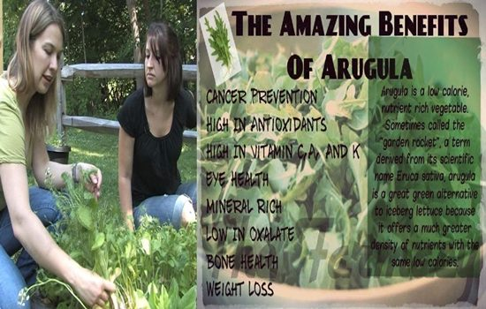 Photo of Arugula Health Benefits