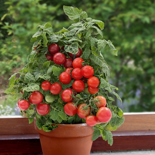 Eight Health Benefits Of Tomatoes For Your Body