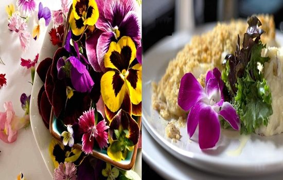 Edible Flowers Nutritious or Just Aesthetic