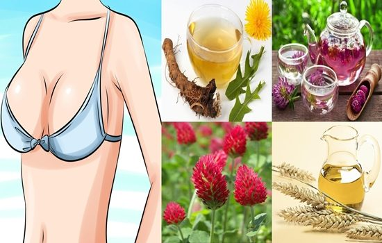 Photo of Seven Effective Home Remedies For Breast Enlargement