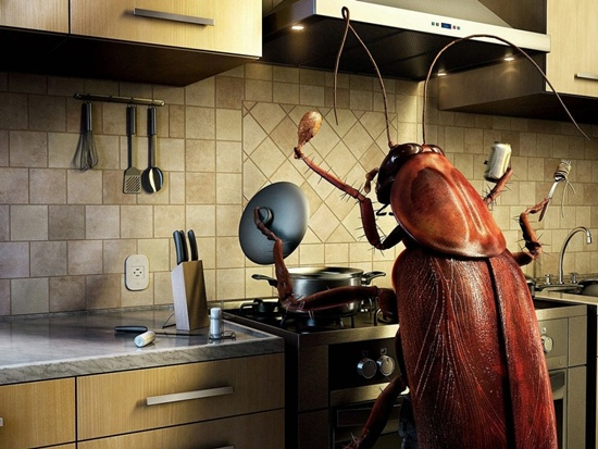Terrifying Health Threats of Cockroaches