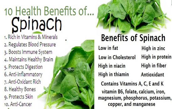 Photo of Spinach – Astonishing Facts You Didn't Know about Spinach