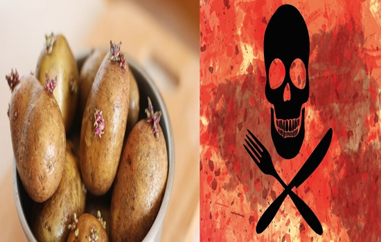Photo of BEWARE OF THE DEADLY FOODS YOU MIGHT COME ACROSS, PART II