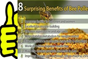 WHAT DO YOU KNOW ABOUT BEE POLLEN & ITS HEALTH BENEFITS?