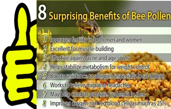 Photo of WHAT DO YOU KNOW ABOUT BEE POLLEN & ITS HEALTH BENEFITS?