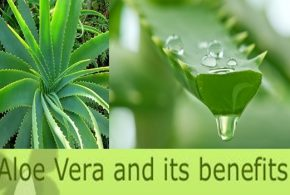 The 7 Benefits of Aloe Vera That Will Make You Run to Get Some Now