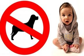 Types of Dog Breeds You Should Not Have When You Have Kids