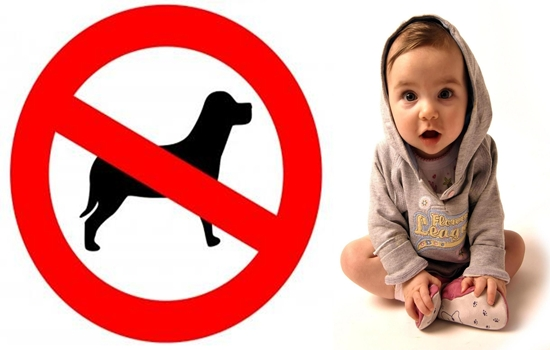 Photo of Types of Dog Breeds You Should Not Have When You Have Kids