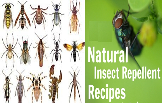 Photo of 4 Easy and Natural Repellent Recipes You Can Make At Home