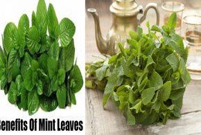 6 Wonderful Health Benefits for Fresh Mint