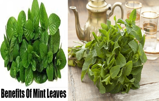 Health Benefits for Fresh Mint