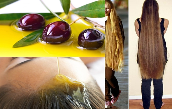 Photo of The importance of olive oil for hair