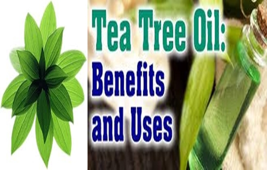 Benefits for Tea Tree Oil for Health and Beauty