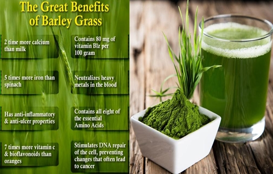 Photo of The Top 4 Greatest Benefits of Barley Grass