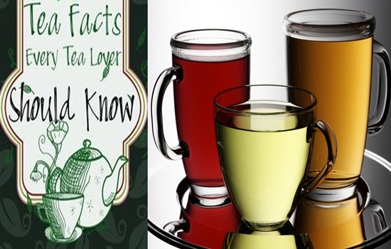 Facts You Didn't Know About Tea