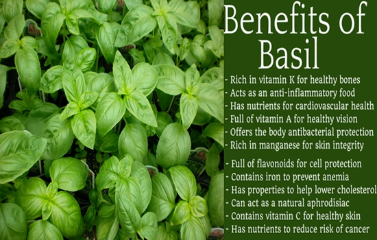 Photo of DO YOU KNOW THE HEALTH BENEFITS OF BASIL?