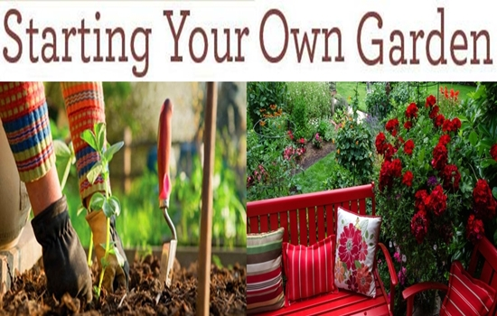 How To Start Your Own Garden