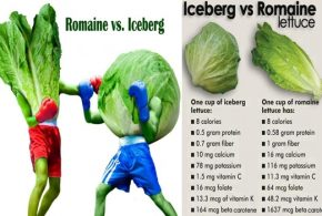 Which Is Better for You, Iceberg or Romaine Lettuce?