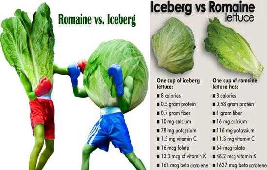 Photo of Which Is Better for You, Iceberg or Romaine Lettuce?