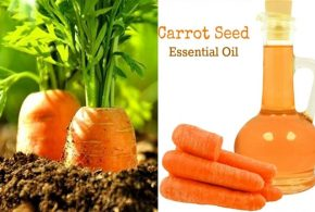 The Top 7 benefits of carrot seed essential oil, the great yet unknown secret of health and beauty