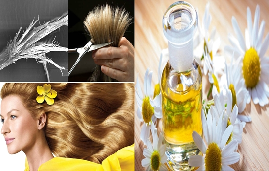 Photo of The top 6 benefits of chamomile oil for hair