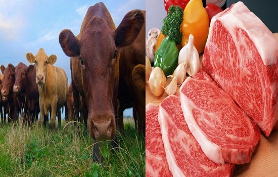 Reasons To Eat Organic Meat