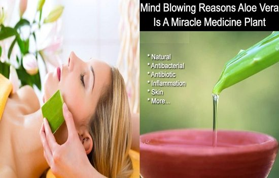 Photo of The Mind Blowing Reasons Why Aloe Vera Is a Miraculous Medicine Plant