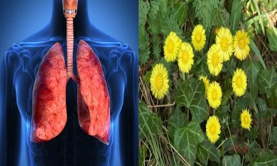 Best Herbs To Cure Respiratory Infections and Protect the Lungs