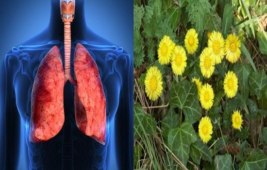 Photo of Three Best Herbs To Cure Respiratory Infections and Protect the Lungs