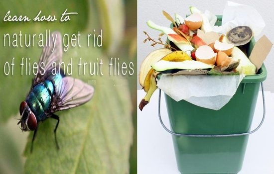Photo of These Simple Affordable Tips Will Make Your House Fruit Fly-free