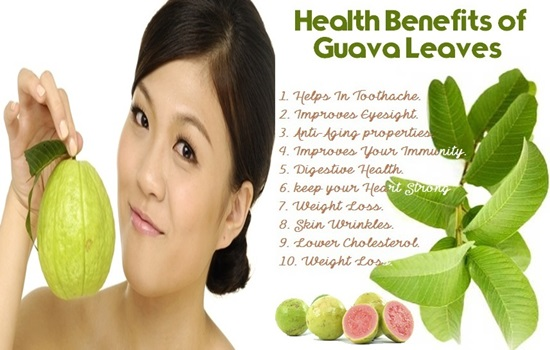 Photo of Miraculous Medical Uses For Guava Leaves You Didn't Know About